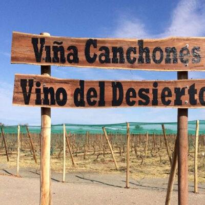 Viña Canchones - Vino del desierto